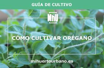 Es una planta aromatica llamada oregano