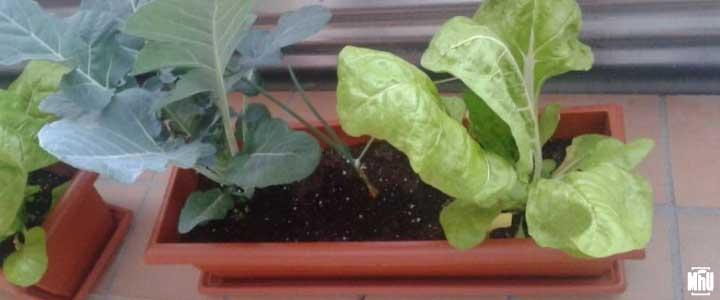 macetas de cultivo