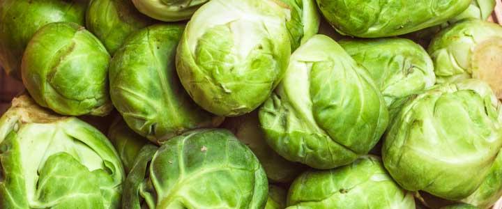 cómo cultivar coles de Bruselas