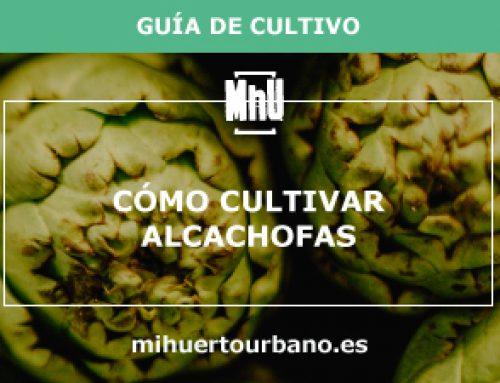 Cómo cultivar alcachofas