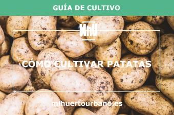 son patatas con tierra