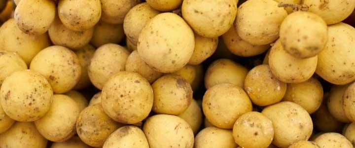 cómo cultivar patatas
