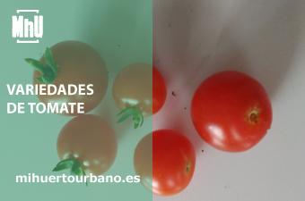 son tomates de un huerto urbano